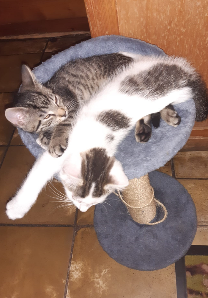 PV zwei Jungkater